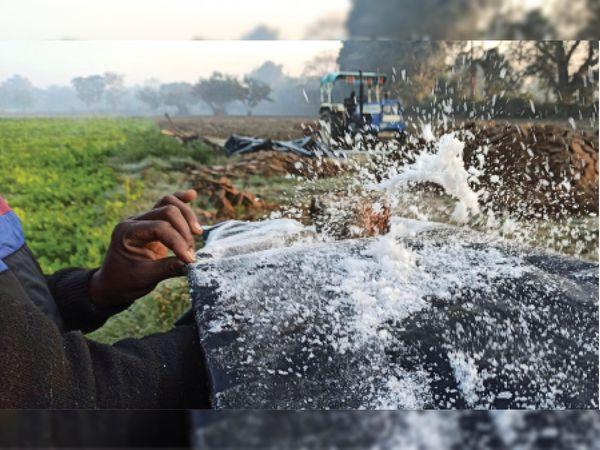 बीना | खेत में तिरपाल पर जमी ओस की बूंदों को तिरपाल के नीचे हाथ मारकर बर्फ के कणों को दिखाते हुए किसान। {फोटो | प्रमोद सैनी - Dainik Bhaskar