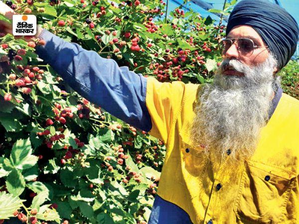 ऑस्ट्रेलिया में किसानों ने फसल बेचने के लिए सोसायटी बनाई है। कॉर्पोरेट से सही दाम नहीं मिलता तो किसानों के पास भंडारण व्यवस्था है। - Dainik Bhaskar