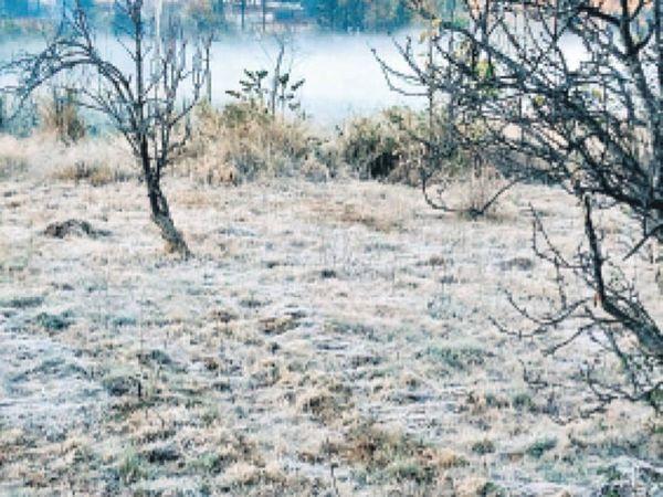 अमरकंटक स्थित औषधि उद्यान में जमी ओस की परत। - Dainik Bhaskar