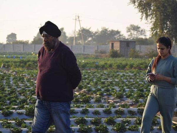 गुरलीन ने स्ट्रॉबेरी की खेती ऑनलाइन सीखी है। 1.5 एकड़ जमीन पर वो इसकी खेती कर रही हैं। इस काम में उनके पापा भी मदद करते हैं।