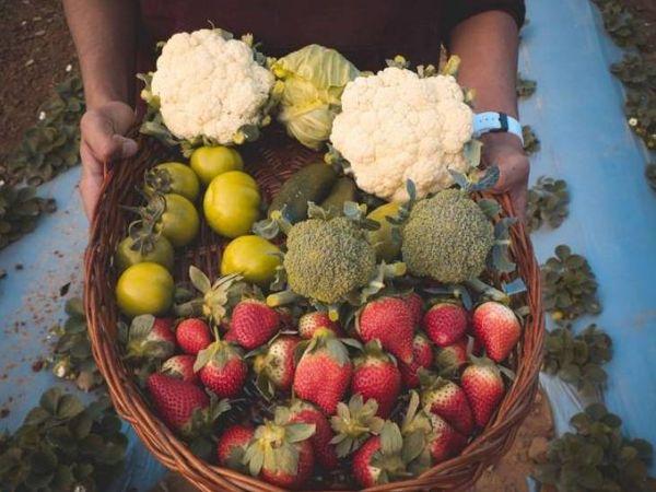 गुरलीन अभी सात एकड़ जमीन पर खेती कर रही हैं। स्ट्रॉबेरी के साथ-साथ वो करीब एक दर्जन सब्जियां ऑर्गेनिक तरीके से उगा रही हैं।