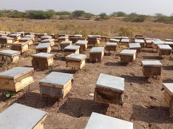 इन पेटियों के अंदर ही मधुमक्खियां रहती हैं और अपना छत्ता बनाकर शहद का निर्माण करती हैं। एक पेटी से करीब ढाई किलो शहद निकलता है।