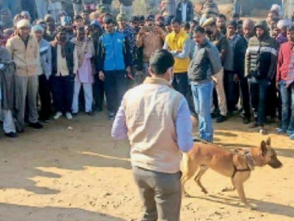 सादुलपुर. ढाणी मौजी गांव पुलिस छावनी बना रहा। वारदात स्थल पर जांच करती डॉग स्क्वायड टीम। - Dainik Bhaskar