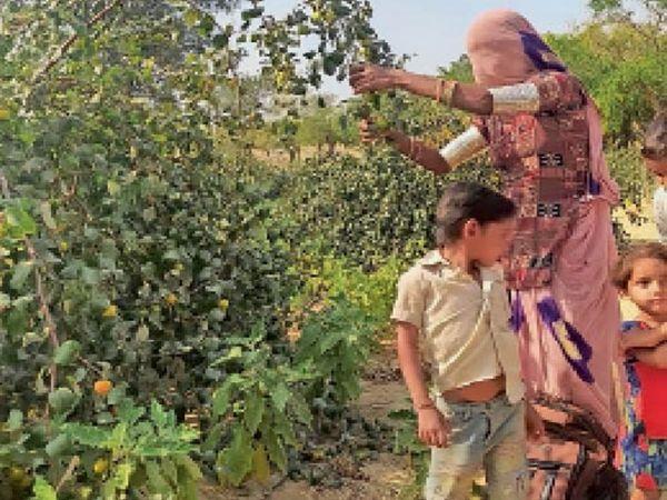 खेत में लगे बगीचे की देखभाल करती किसान कमला। - Dainik Bhaskar