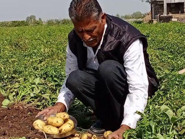 तुलसी बताते हैं कि उन्होंने 50 रुपए प्रति किलो के हिसाब से 14 क्विंटल आलू के बीज खरीदे थे। इसके लिए 35 हजार रुपए का खर्चा आया था।