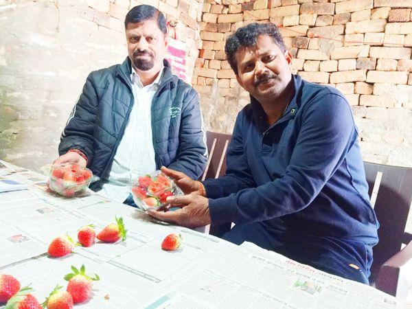 स्ट्रॉबेरी की पैकिंग का काम रमेश और मदन खुद ही करते हैं।