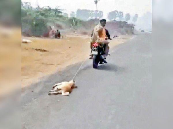 कुत्ते को रस्सी में बांधकर घसीटा। - Dainik Bhaskar