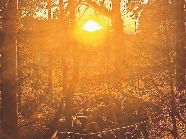 माउंट आबू में सुबह देर तक कोहरा छाया रहा, पारा 3.4 डिग्री पहुंचा। - Dainik Bhaskar