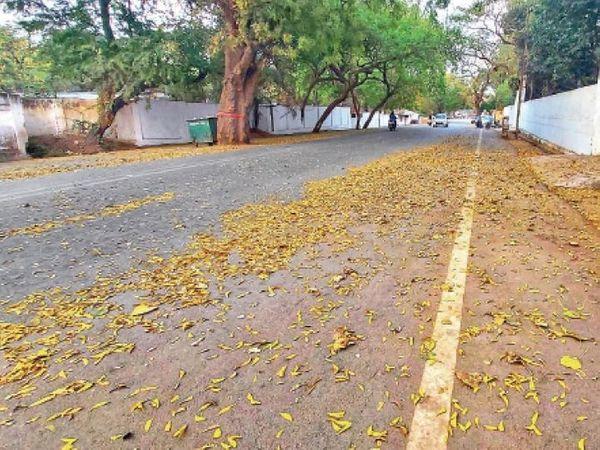 रायपुर की सड़कों में इन दिनों पेड़ों की सूखी पत्तियों ऋतुओं के राजा पतझड़ के स्वागत में जैसे बिखर गई हैं।