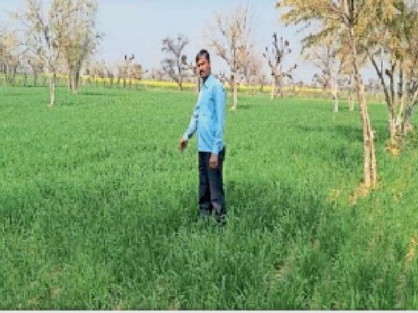 खेतों में फसल की देखरेख करते किसान। - Dainik Bhaskar