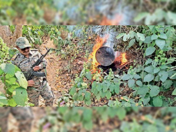 ऐसे आग लगाकर जावा महुआ को नष्ट की पुलिस। - Dainik Bhaskar