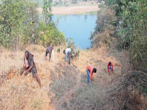 ग्राम धानसी में नर्मदा किनारे रिपेरियन जोन में काम करते गांव के युवक। - Dainik Bhaskar