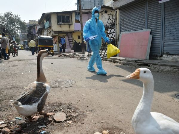 मुंबई के धारावी इलाके में कोविड टेस्टिंग के लिए जाता हुआ एक स्वास्थ्यकर्मी। मुंबई में कोरोना के बढ़ते केस के बाद अब हॉटस्पॉट रहे इलाकों में टेस्टिंग तेज कर दी गई है। - Dainik Bhaskar