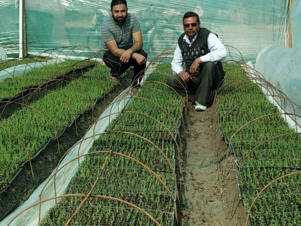 वे टिशू कल्चर तकनीक की मदद से 30 एकड़ जमीन पर कुफरी फ्रायोम वैरायटी का आलू तैयार कर रहे हैं।