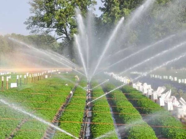 हर खेत तक पानी पहुंचाने के साथ पानी अधिकतम उपयोग सुनिश्चित हो, इसके लिएप्रधानमंत्री नरेंद्र मोदी ने'पर ड्राप मोर क्राप' का नारा दिया था। इसकी झलक सोमवार को योगी सरकार के वित्तीय वर्ष 2021-22 केबजट में भी देखने को मिली। - Dainik Bhaskar