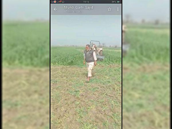 घरौंडा के मुंडीगढ़ी में फसल पर ट्रैक्टर चलाता किसान। - Dainik Bhaskar