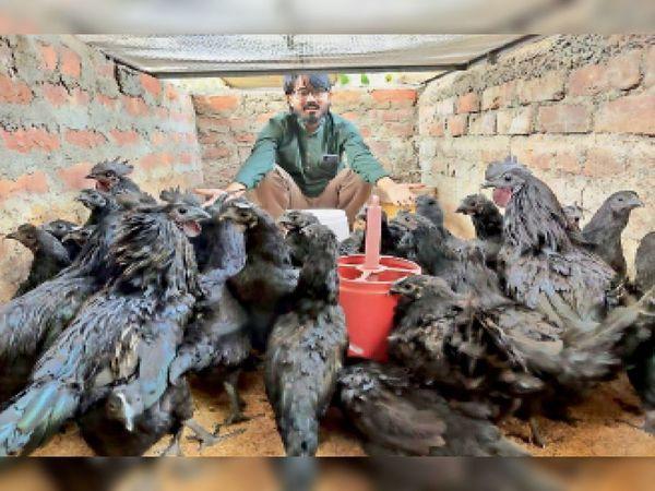 कड़कनाथ मुर्गों के साथ इंजीनियर प्रभात। - Dainik Bhaskar