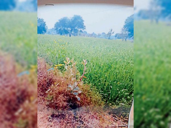 नरवर में शासकीय हैंडपंप पूर्व सरपंच ने किया कब्जा। - Dainik Bhaskar