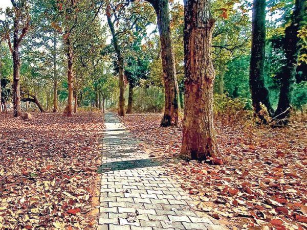 पेड़ाें से पुराने पत्ते गिर रहे हैं वहीं नए पत्ते का आगमन भी हाे रहा है। - Dainik Bhaskar
