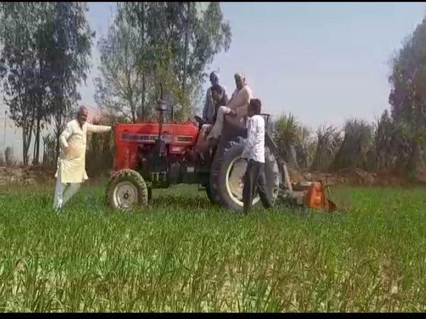 यूपी के शामली में एक किसान ने कृषि कानून वापस लेने की मांग को लेकर अपनी पांच बीघे की फसल पर टैक्टर चलाकर बबार्द कर दिया। - Dainik Bhaskar