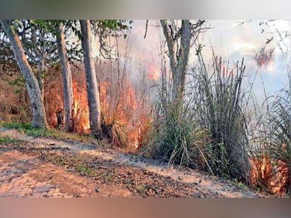 Terrible fire at Harike