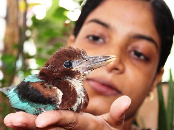 निशा घायलों पक्षियों को ठीक कर उनके प्राकृतिक निवास तक पहुंचाती हैं।