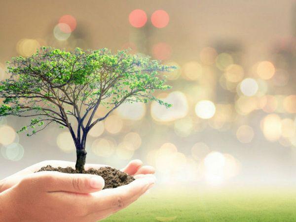 भारत में कुल 7.12 करोड़ हेक्टेयर जंगल बचे हैं। - Dainik Bhaskar