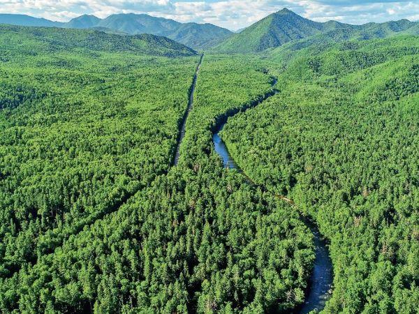 रूस ने एक नया डिजिटल प्लेटफार्म तैयार किया है जो सैटेलाइट और ड्रोन के जरिए कार्बन सोखने वाले जंगलों का डेटा जुटाएगा। (सिंबॉलिक फोटो) - Dainik Bhaskar