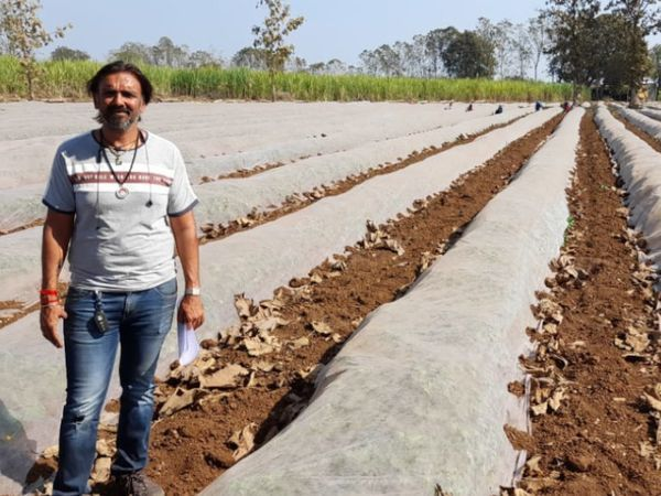 गुजरात के सूरत जिले के रहने वाले प्रवीण पटेल नई तकनीक से खीरे की खेती करते हैं। इससे उनकी अच्छी-खासी कमाई हो रही है। - Dainik Bhaskar