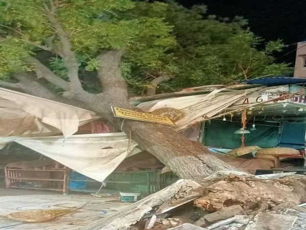 अजमेर की दरगाह में गिरा पेड़ - Dainik Bhaskar