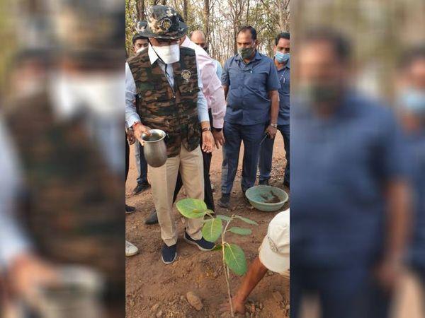 मुख्यमंत्री शिवराज सिंह चौहान ने पन्ना टाइगर रिजर्व में बरगद के पौधे का किया रोपण - Dainik Bhaskar