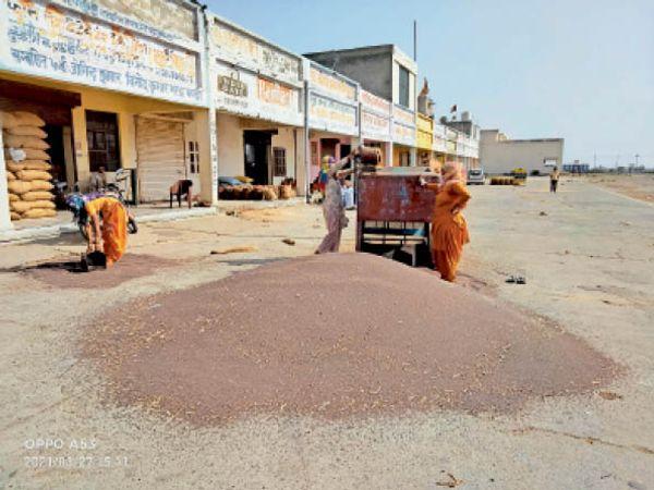 सोनीपत, मंडी में सरसों की साफ करती महिलाएं। - Dainik Bhaskar