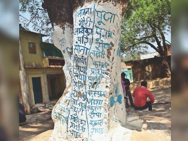 पेड़ पर लिखे लिखे गांव की बच्चियों के नाम। - Dainik Bhaskar