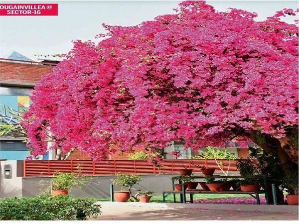 शहर में इन दिनों सड़क किनारे रंग-बिरंगे फूल दिख रहे है