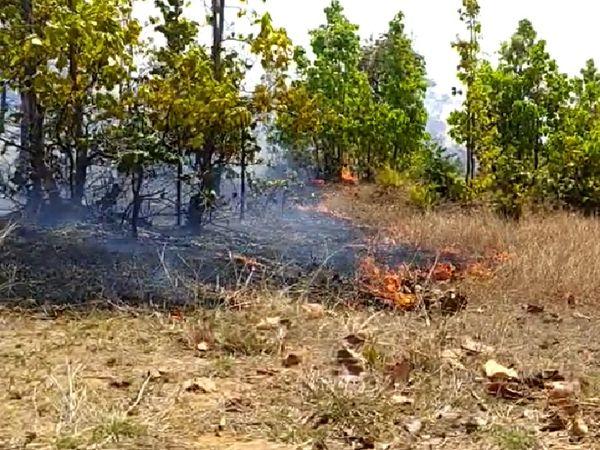 जंगल में लगी आग।