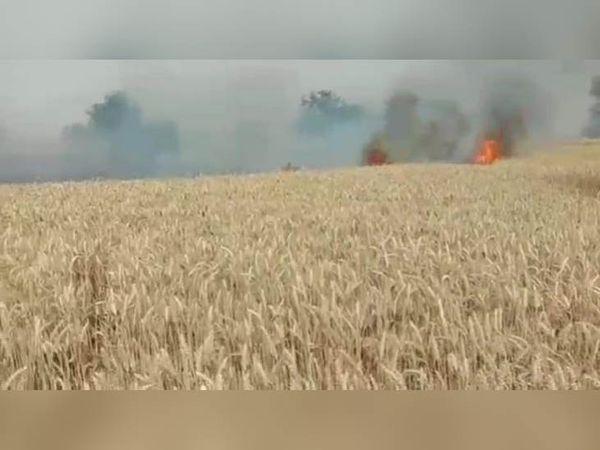 चरखी दादरी के गांव गांव सिसवाला में गेहूं की फसल को लगी आग। इससे दो एकड़ फसल जल गई।
