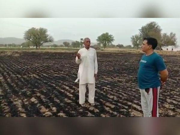चरखी दादरी जिले के गांव असावरी में गेहूं की 4 एकड़ की फसल जलकर राख हो गई।  इसे महड़ा निवासी सुरेंद्र ने जमीन ठेके पर लेकर बीजा था। - Dainik Bhaskar