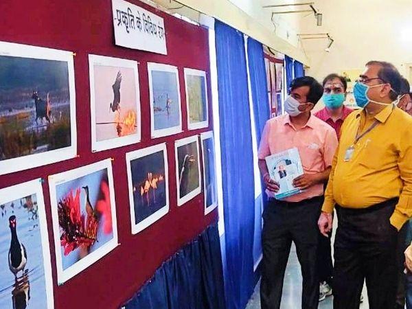 सूचना केंद्र पर आयोजित प्रदर्शनी का अवलोकन करते उदयपुर कलेक्टर। - Dainik Bhaskar