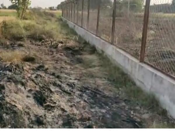 बहारूका में सब स्टेशन से लगी आग से फसल नष्ट का दृश्य। - Dainik Bhaskar