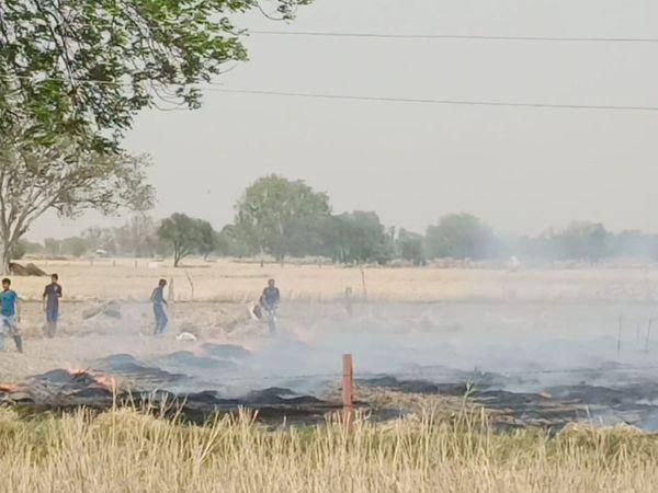 कटी फसल में लगी आग पर काबू पाते ग्रामीण। - Dainik Bhaskar