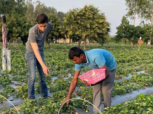 21 साल के पार्थ अभी ग्रेजुएशन कर रहे हैं। वे स्ट्रॉबेरी के प्रोडक्शन से संबंधित सभी काम संभालते हैं।