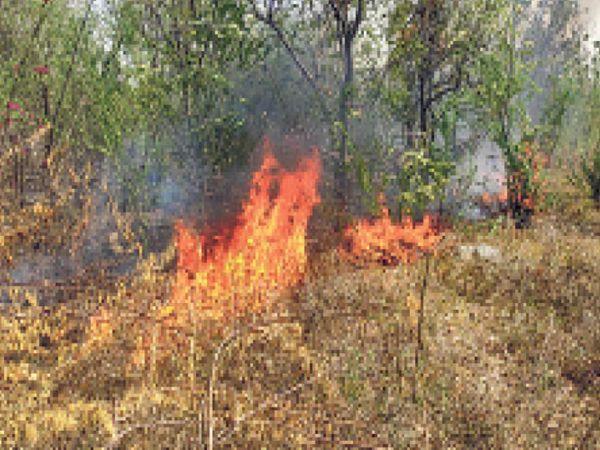 खेतड़ी नगर. नेचर पार्क में तार टूटने से लगी आग से उठती लपटे। - Dainik Bhaskar