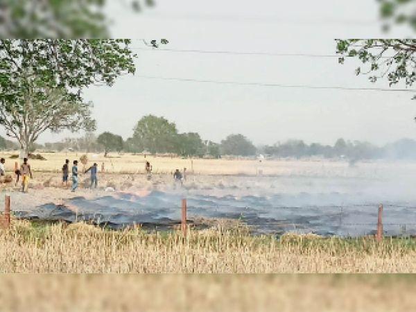 सैंपऊ. आग से धू-धू कर जलती खेत में रखी गेहूं की कटी हुई फसल। - Dainik Bhaskar