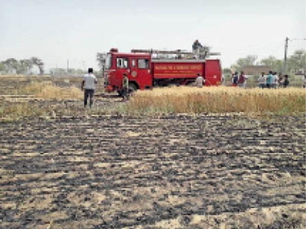 आग के कारण फसल जल कर हुई राख - Dainik Bhaskar