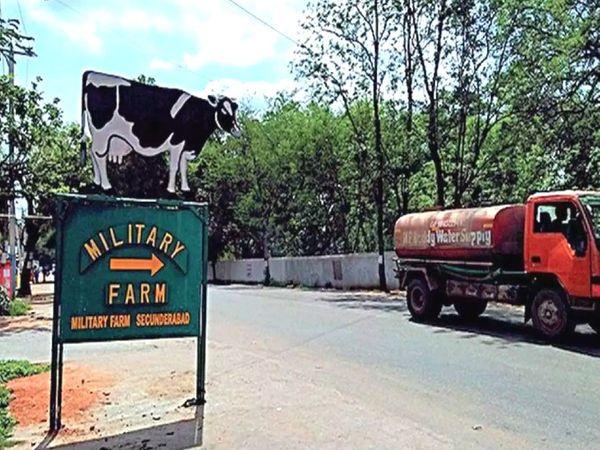 आजादी के दौरान इन फार्म्स में करीब 30 हजार गायें और दूसरे मवेशी थे।