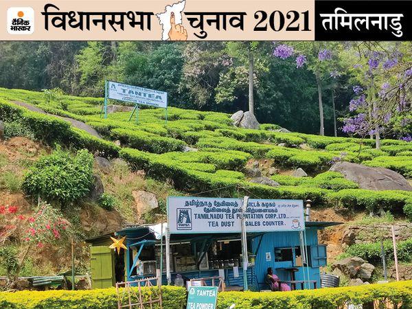 क्वीन ऑफ हिल स्टेशन नाम से मशहूर ऊटी में इस बार के चुनाव में चाय बागान के मजदूर और यहां के सब्जी उत्पादक निर्णायक की भूमिका में हैं। - Dainik Bhaskar