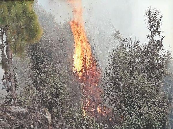उत्तराखंड के जंगलों में आग बेकाबू हो गई है। स्थिति की गंभीरता को देखते हुए केंद्र ने एनडीआरएफ और हेलीकॉप्टर भेजें हैं। - Dainik Bhaskar