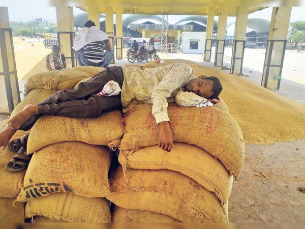 ये तस्वीर सरकारी सिस्टम का आईना है...गेहूं बेचने आए किसान बारी के इंतजार में थक हारकर सो जाते हैं - Dainik Bhaskar