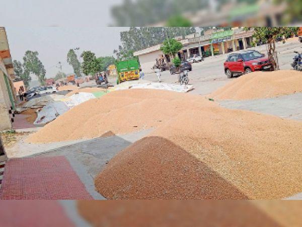 अनाज मंडी में किसानों द्वारा बेचने के लिए लाया गया गेहूं। - Dainik Bhaskar