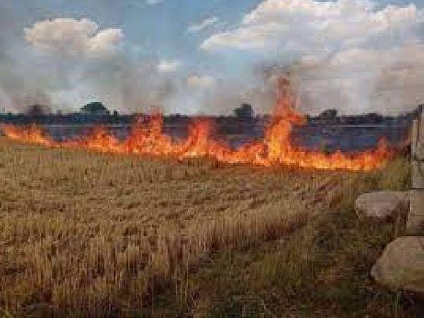 नरवाई में रोक के बावजूद लगाई आग, किसान के खिलाफ दर्ज हुई एफआईआर। - Dainik Bhaskar